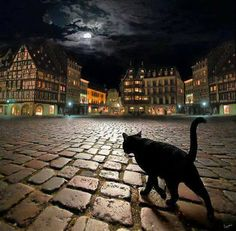 love the cat in the fore ground