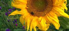 Insektenhotel – Ein Hotel für Nützlinge im Garten