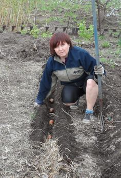 А мы сажаем картошку! Пошаговая инструкция