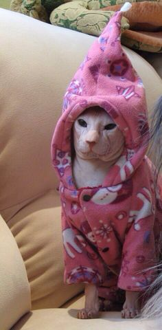 Sphynx cat wearing pajama outfit/ costume #hairless