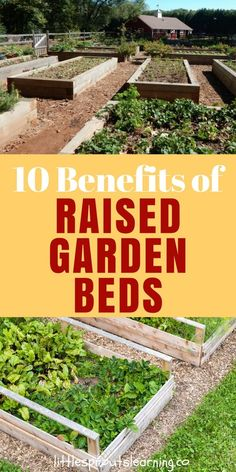 Raised garden beds are fairly popular among gardeners these days. What's all the hype? There is nothing wrong with gardening right in the ground, but raised beds offer some different options to gardeners as growing spaces.