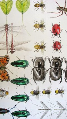 the art room plant: Cath Hodsman A Level Art Sketchbook, Bug Art, Group Art, Beautiful Bugs, Insect Art, Plant Art, Bugs And Insects, Fauna, Natural Forms