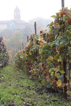 Autumn in the Monferrato