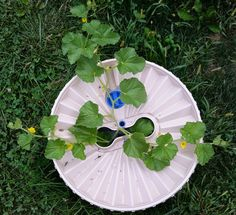 The Groasis Waterboxx, shown from the top, growing a cantaloupe grown from seed.  The Waterboxx is filled with water at planting the the cantaloupe never needs watered again.  The Waterboxx can be reused for up to ten years.