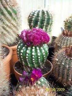 Deep magenta flowers by wallygrom, via Flickr