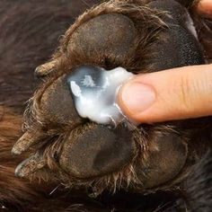 dog paw care tips Dry Dog Paws, Dry Dog Nose, Dog Paw Pads, Pet Paws, Dog Paw Cream, Baby Popo, Dog Booties, Dog Care Tips, Soaps