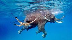 La belle et la bête. Un voyage onirique, quelque part dans les eaux indiennes, entre une femme et un animal unis pas le même plaisir d'être et de nager ensemble.