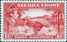 Sierra Leone 1938 SG 190 Rice Harvesting Fine Mint SG 190 Scott 175 Condition Fine LMM Only one post charge applied on multiple purchases Details
