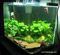 Tank Scape: My Betta Tank: The River Bed