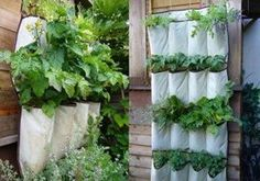 Container Vegetable Gardening - How to grow fruits and vegetables ...
