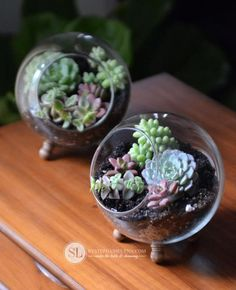 259 Best Succulent Terrarium Ideas Images In 2019 Succulent