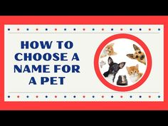 How to Choose a Name for Your New Pet 2021 ! Unique Pet Names - YouTube Boy Puppy Names, Cute Girl Dog Names, Boy Cat Names, Cute Names For Dogs, Female Dog Names, Best Dog Names, Kitten Names, Pet Names, Cat Names Girl Unique