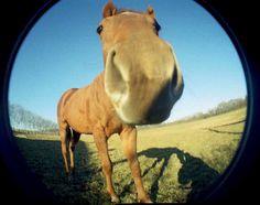 22 times horses behaved like teenage girls