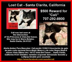 Lost cat in Santa Clarita, CA. Cali was on her way to her furver home, but got lost. Please help find her! https://www.facebook.com/photo.php?fbid=10152153816080930set=a.123276960929.133045.123268885929type=1 and https://www.facebook.com/causeforcali