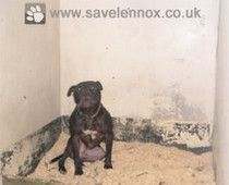 Lennox has been held in a filthy jail cell for over two years Photo credit:  savelennox.co.uk