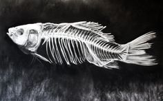 Kell Black, Fish Skeleton, Charcoal on paper