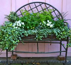 beautiful old iron planter filled with ivy and ferns....