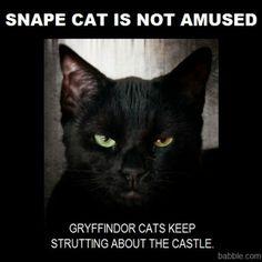 Harry potter cats