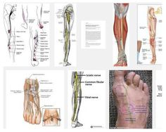 Accessory Deep Peroneal Nerve - http://www.medikova.com/disease-accessory-deep-peroneal-nerve