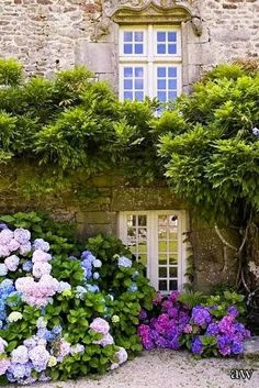 Flower Garden Picture In Your Front Yard.