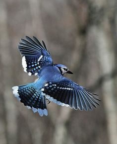 How to Photograph Birds in Flight -- via wikiHow.com