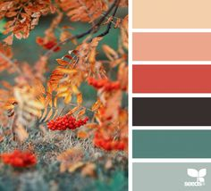 Color Season | Design Seeds