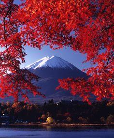 Awesome framing of Mount Fuji, Japan