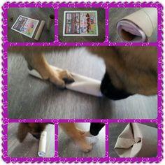 Spel 35 (hondenspel hond spel denkwerk hersenwerk brain dog game play diy)  www.facebook.com/denkspellenvoorjehond