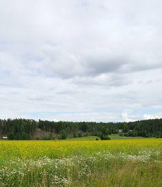 Suomen kesä  #kesä #summer #summermood #summerinfinland #seasonsoffinland #landscape #maisema #views #nature #naturelover #lifestyleblogger #nelkytplusblogit #åblogit #ladyofthemess