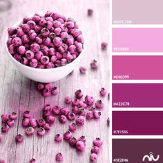 Pink Color Palette