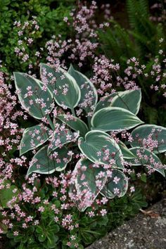 My Favorite Plant Combinations 61