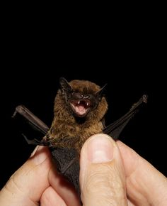 batty   ...........click here to find out more  http://www.allaboutallaboutallabout.com/