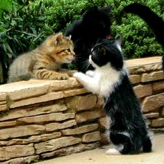 Cat chat.