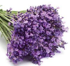 Wedding Details, Diy And Crafts, Lavender, Fresh, Vegetables, Garden, Flowers, Plants, Color