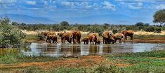 South Africa: Cape Town with Safari – Tours for the World South Africa Honeymoon, Visit South Africa, Countries To Visit, Places To Visit, Cape Town, The Tourist, Wildlife Safari, Victoria Falls, African Safari
