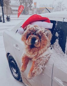 Ho ho ho now I'm cold. But it was fun though Puppies chow chow Christmas Feeling, Noel Christmas, Winter Christmas, Xmas, Christmas Pets, Winter Holidays, Vintage Christmas, Christmas Wreaths, Cute Puppies