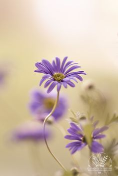 Photograph Flower Dance by Claudia Samples on 500px
