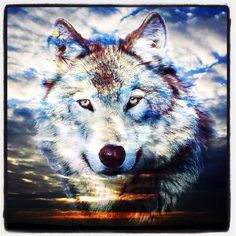 Wolf/sky pic.