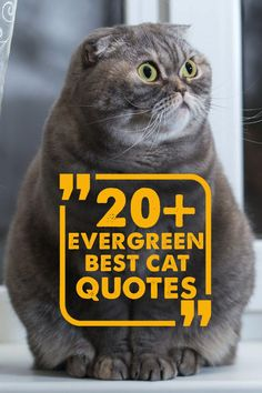Maybe you're looking for the right famous cat quote to add to a new canvas print of your kitty. You might even need quotes for a new photo for your upcoming Christmas cards. Or maybe you just need a good laugh. Whatever your reason is, we're here to help. Check out our collection of cat quotes below.   #catquotes #catquote #cat #cats #catlover #catoftheday #catlovers #catlove #catlife #catsofig #catslover Cat Loss Quotes, Cute Cat Quotes, Kitten Quotes, Funny Cat Memes, Funny Cat Videos, Funny Cat Pictures, Funny Cats, Inspirational Cat Quotes, Kitten Cartoon
