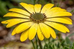 flower with water drops by Michael Ghebremedin on 500px
