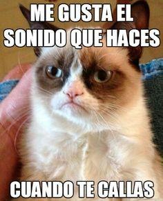 memes gato gruñon - Buscar con Google