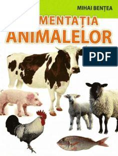 retete furaj Ouat, Lamb, Animals, Animales, Animaux, Animal, Animais, Baby Sheep