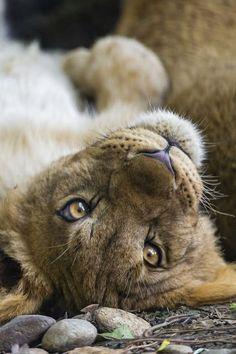 Cute cub on the back Amazing World beautiful amazing