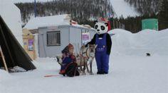 """Wonder World of Ice"" (52 min., Finland) | dir. Ilkka Rautio | Film Website: www.illume.fi"