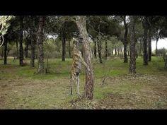 Vía libre para asesinar a los perros y gatos abandonados - Afecto Animal. - YouTube