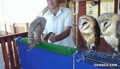Owl dancing on Ke$ha