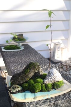 Mini moss garden on stoneware and porcelain plates.   by Grancy Fu.