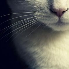 Raindrops on roses and whiskers on kittens. . . These are a few of my favorite things