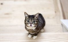 Daily Cute: Lil Bub Overcomes Deformities and Learns to Climb Stairs