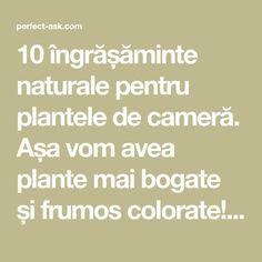 10 îngrășăminte naturale pentru plantele de cameră. Așa vom avea plante mai bogate și frumos colorate! - Perfect Ask How To Get Rid, Wisteria, Good To Know, Mai, Gardening, Landscaping, Bonsai, Interior, Gardens